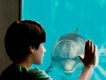 Weekend Box Office: 'Dolphin Tale' Ousts 'Lion King 3D' in Switcheroo