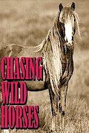 Chasing Wild Horses