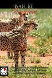 Nature Wonders KRUGER PARK South Africa