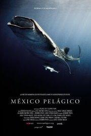 Mexico Pelagico