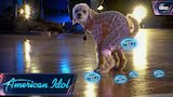 Watch American Idol - American Idol Audition Goes to the Dogs - American Idol on ABC Online