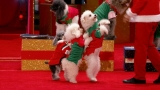 Watch America's Got Talent Season  - Olate Dogs Are Back to Put All Other Pets to Shame Online