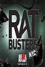 Rat Busters NYC
