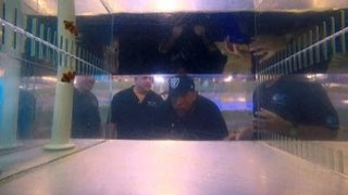 Watch Tanked Season 10 Episode 8 - Chicago Bull Boom Bo... Online