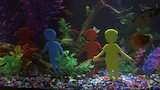 Watch Tanked - There Are Over 30 Fish In This Custom Preeschool Aquarium! | Tanked Online