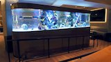 Watch Tanked - A Hockey-Themed Shark Tank For The San Jose Sharks | Tanked Online