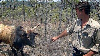 Watch Outback Wrangler Season 1 Episode 3 - Wild Horse Bust Online