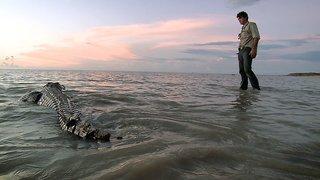 Watch Outback Wrangler Season 1 Episode 4 - Flying Crocs Online