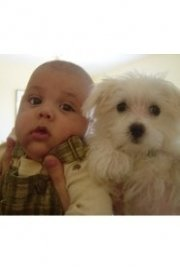 Puppies vs. Babies
