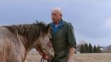 Watch The Incredible Dr. Pol - The Incredible Dr. Pol - Horse Castration Online
