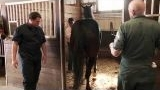 Watch The Incredible Dr. Pol - The Incredible Dr. Pol - Checking the Horses Online