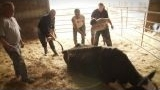 Watch The Incredible Dr. Pol - The Incredible Dr. Pol - Dr. Pol and the Farmers Online