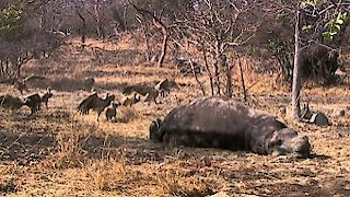 Watch Africa's Deadliest Season 1 Episode 2 - Predator Swarm Online