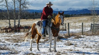 Watch Heartland Season 8 Episode 817 - All I Need Is You Online
