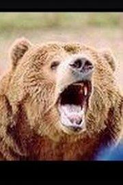 Bear CSI