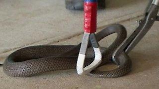 Watch Dirty Jobs Season 8 Episode 2 - Deadly Snake Wrangle... Online