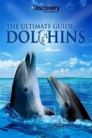 Dolphins: The Ultimate Guide