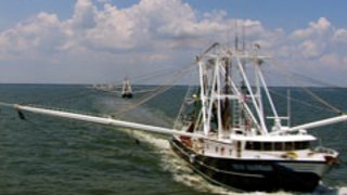 Watch Big Shrimpin' Season 1 Episode 4 - Troubled Waters Online