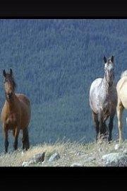 The Last Wild Mustangs