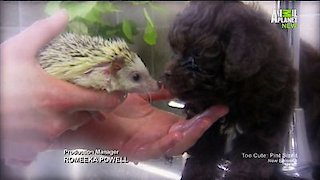 Watch Too Cute Season 5 Episode 7 - Puppies and Prickles Online