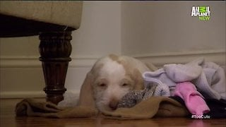 Watch Too Cute Season 5 Episode 8 - Sock Puppies Online