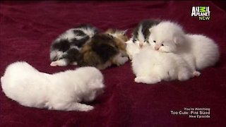 Watch Too Cute Season 5 Episode 11 - Cuddly Kittens Online