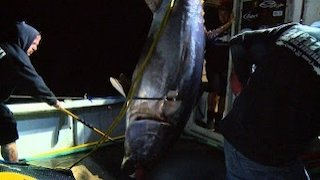 Watch Wicked Tuna Season 5 Episode 7 - Snitches Get Fishes Online