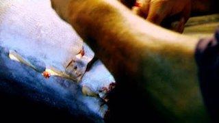 Watch Wicked Tuna Season 5 Episode 10 - Doubling Down Online