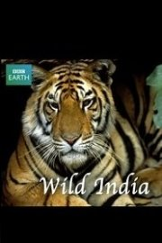 Wild India (Land of the Tigers)