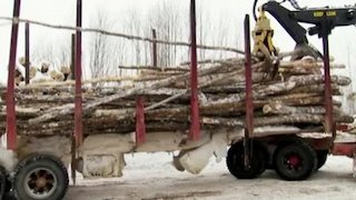 Watch American Loggers Season 3 Episode 10 - Collision Course Online