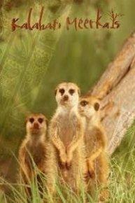 Kalahari Meerkats