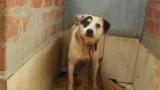 Watch Primer Impacto Season  - Monserrat Te Presenta la nica Favela para Animales en Brasil Online