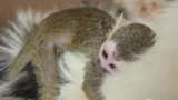 Watch Primer Impacto Season  - Una Gata le Salv la Vida a un Monito en un Zoolgico Online