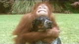 Watch Unlikely Animal Friends - Unlikely Animal Pairs Defy Laws of Nature Online