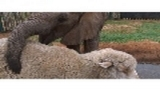 Watch Unlikely Animal Friends - A Match Made in Africa | National Geographic Online