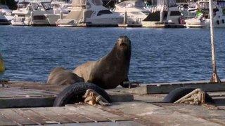 Watch Sea Rescue Season 5 Episode 7 - Sea Cow in Texas Online