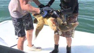 Watch Sea Rescue Season 5 Episode 11 - Hooked Online