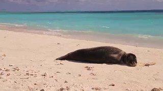 Watch Sea Rescue Season 5 Episode 12 - Heron Today, Gone To... Online