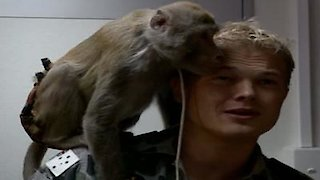 Watch Sea Patrol Season 3 Episode 2 - Monkey Business Online