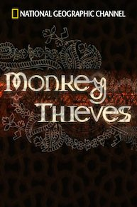 Monkey Thieves