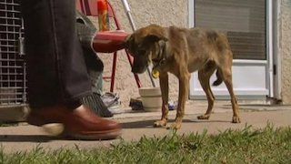 Watch Dog Whisperer Season 3 Episode 15 - Dasher, Riley and Fo... Online