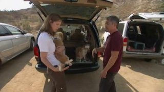 Watch Dog Whisperer Season 3 Episode 16 - Hope, Chloe and Sam Online