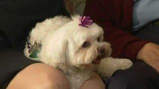 Watch Dog Whisperer Season 3 Episode 17 - Bodhi, Maggie & Moll... Online