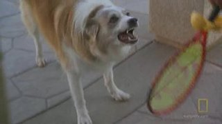 Dog Whisperer Season 7 Episode 8