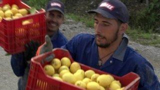 Watch How Do They Do It? Season 10 Episode 2 - Longboards, Lemonade... Online