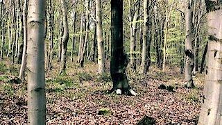Watch Wolfblood Season 3 Episode 11 - The Suspicions of Mr... Online