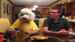 Watch America's Funniest Home Videos Season 23 Episode 19 - AFV Presents a Salut...Online