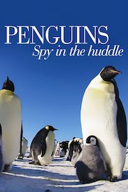 Penguins - Spy in the Huddle