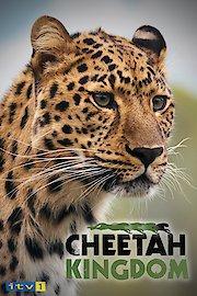 Cheetah Kingdom