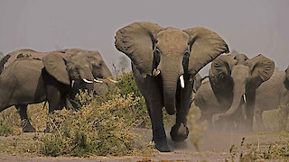 Watch Nature Season 34 Episode 4 - Soul of the Elephant Online